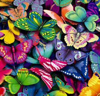 MKAZ020 Набор алмазный «Радужные бабочки»