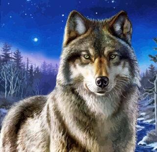 KAZ016 Раскраска по номерам «Волк»