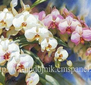 KAZ044 Раскраска по номерам «Орхидеи1»