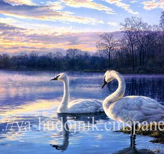 KAZ050 Раскраска по номерам «Семья лебедей»
